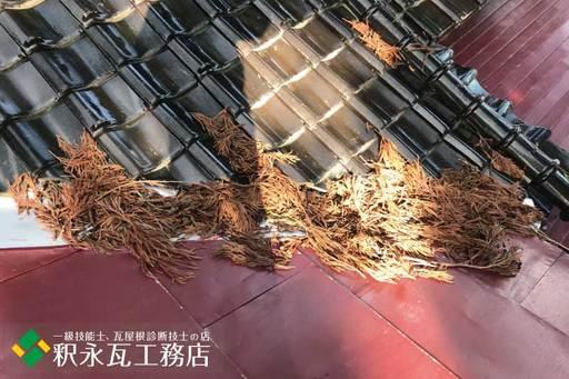 屋根のすんば、落ち葉掃除 立山町神社4.jpg